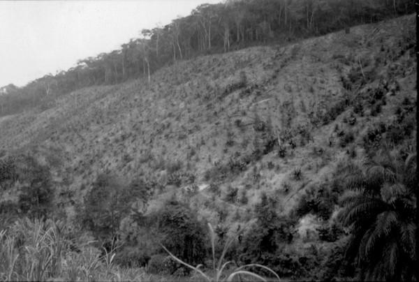Plantações de banana e café em Conceição do Mato Dentro (MG) - set. 1952