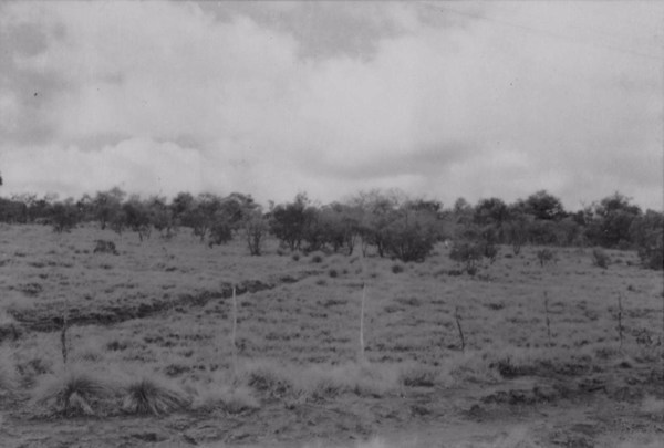 Vegetação na cidade de Paraguaçu (MG) - 1958