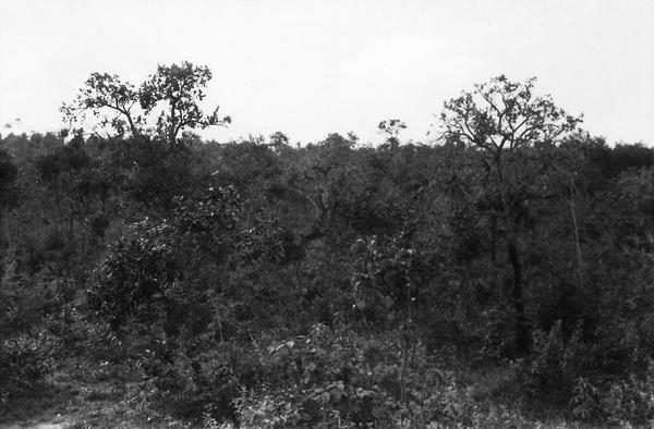 Vegetação na cidade de Lagoa Santa (MG) - 1958