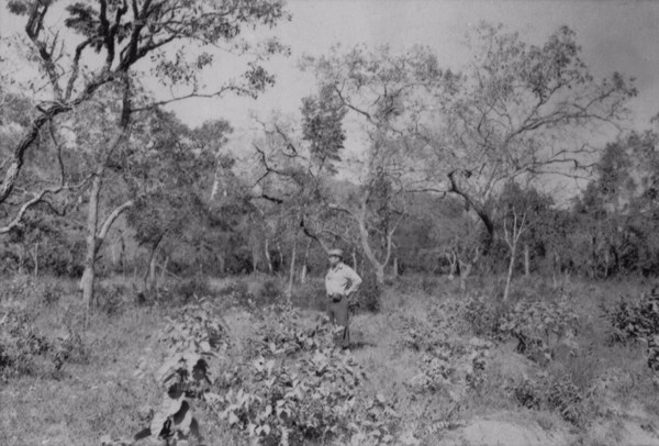 Vegetação de cerradão (MG) - 1958