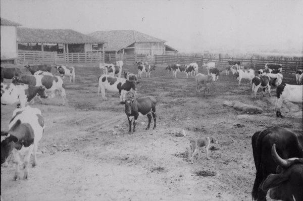 Curral da fazenda Boa Vista (MG) - 1958