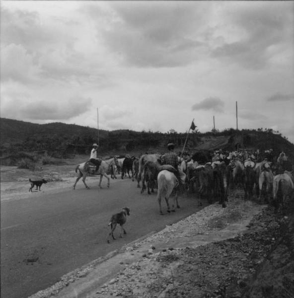 Boiada na estrada (MG) - 1967