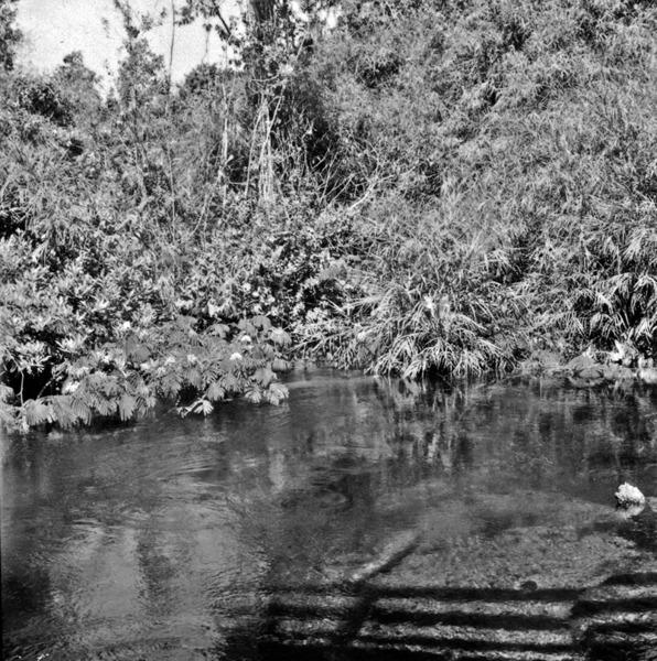 Vegetação, vendo-se o córrego do Juruena (MT) - 1968