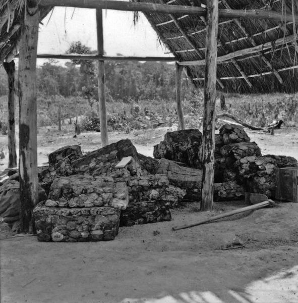 Borracha de cocho numa colocação de seringueiro a 205 Km. ao norte da ponte sobre o rio dos Patos, no caminho de Porto dos Gaúchos (MT) - 1968