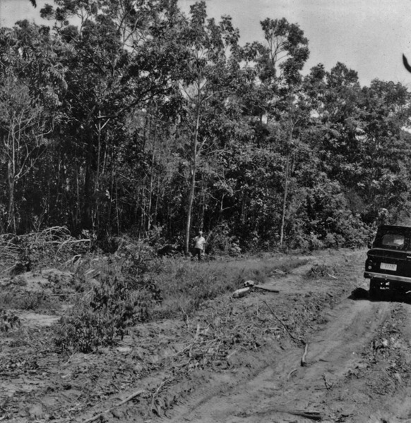Aspecto do cerradão a 209 Km. ao norte da ponte sobre o rio dos Patos, na estrada para Porto dos Gaúchos (MT) - 1968