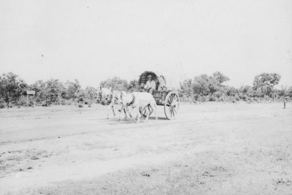 Carroça puxada por três animais em Várzea Grande (MT) - 1955