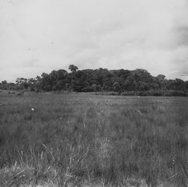 Cabeceira perto de Sapezal (MT) - 1955