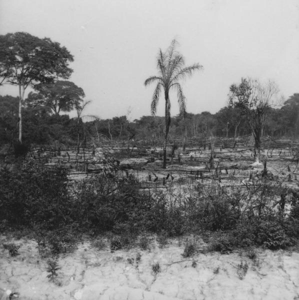 Mata semi-decídua na estrada de Aragarças em Xavantina (MT) - 1955