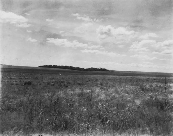 Depressão fechada com campo limpo entre Ponta Porã e Campanário (MT) - 1952