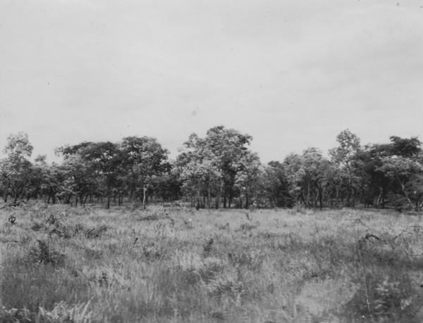 Vegetação do pantanal entre Porto Esperança e Aquidauana (MT) - 1952