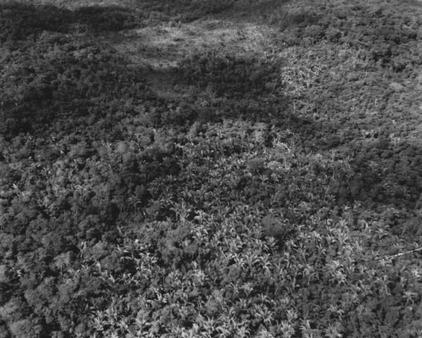Mata com babaçu entre Poxoréu e Guiratinga (MT) - s.d.