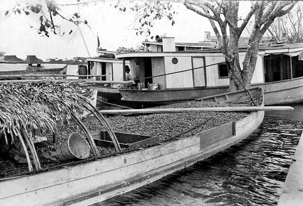 Embarcação carregada de castanhas do Pará , Alenquer (PA) - 1953