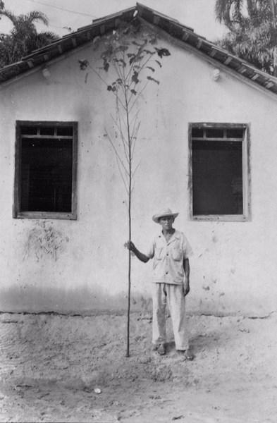 Proprietário de um sítio em Castanhal com uma vara de Malva (PA) - jun. 1953