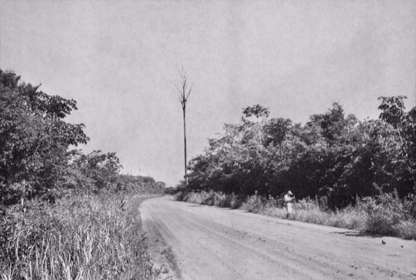 Vegetação na margem da estrada que liga Belém a Bragança em Castanhal (PA) - jun. 1953
