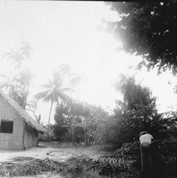 Preparação de palha para cobrir as casas em Maracanã (PA) - déc. 50