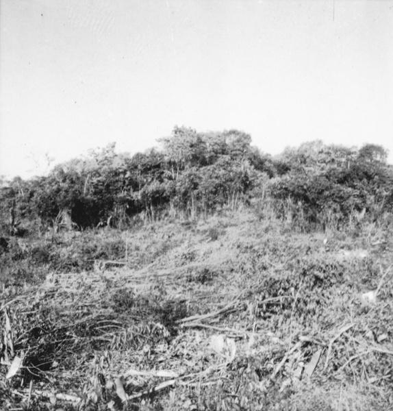 Desmatamento de capoeira em Vigia (PA) - déc. 50