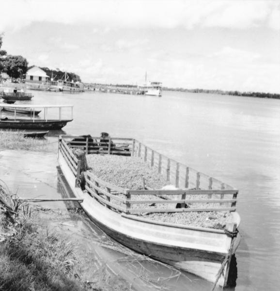 Batelão de transporte de castanha em Oriximiná (PA) - maio. 1966