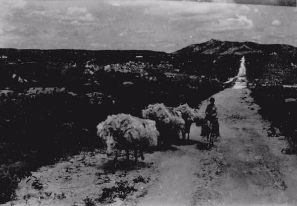 Transporte de fibra de agave em Juru (PB) - 1956