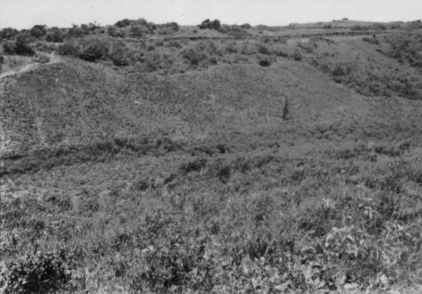 Vegetação nas encostas no Cabo de Santo Agostinho (PE) - 1956