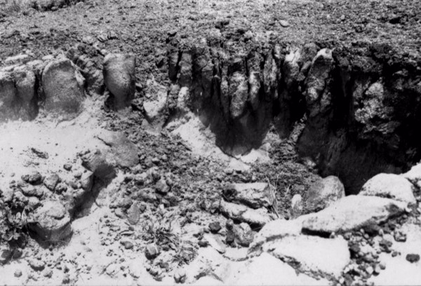 Erosão em Ipojuca (PE) - 1955