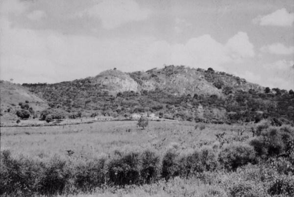 Vegetação no Engenho Goiabeira em Quixaba (PE) - 1955