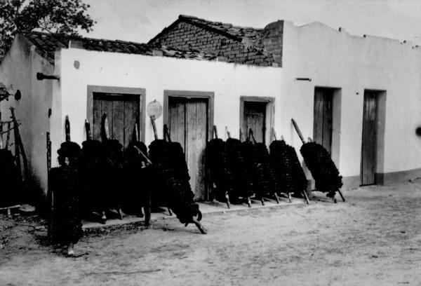 Rolos de fumo na Localidade de Terra Vermelha em Amaraji (PE) - 1955