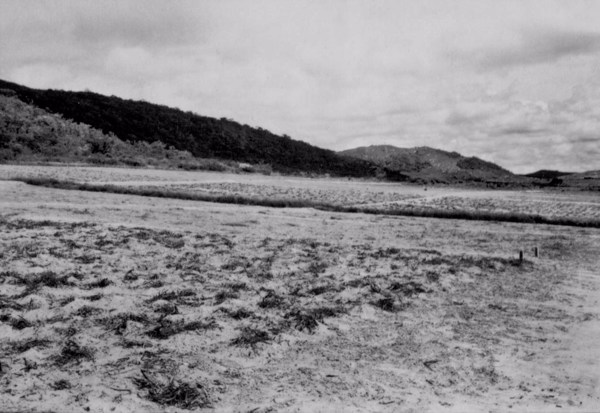 Posto experimental da Fábrica Peixe : Município de Pesqueira - 1955