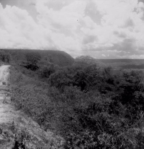 Vegetação em Exu (PE) - fev. 1962