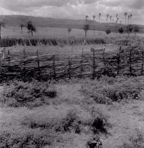 Sítio Gameleira em Exu (PE) - fev. 1962