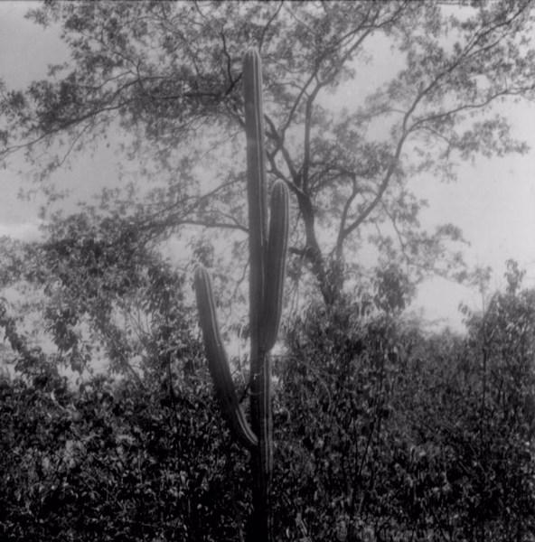 Vegetação de caatinga em Lagoa Grande (PE) - fev. 1962