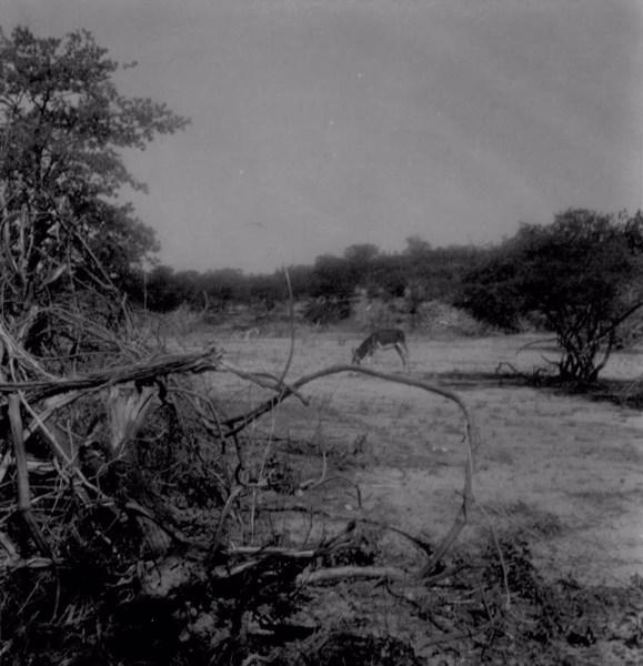 Caatinga em Santa Maria da Boa Vista (PE) - fev. 1962
