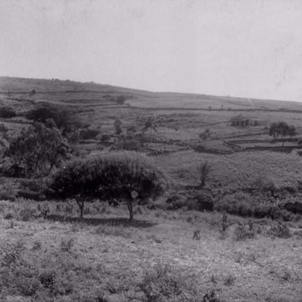 Zona de cultivo em Santa Cruz da Baixa Verde (PE) - fev. 1962