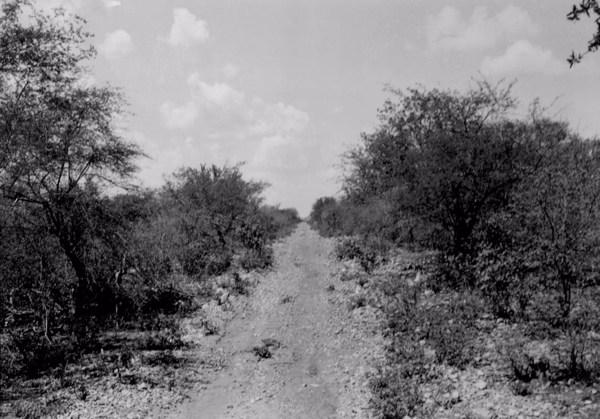 Estrada em Jacobina do Piauí (PI) - 1957