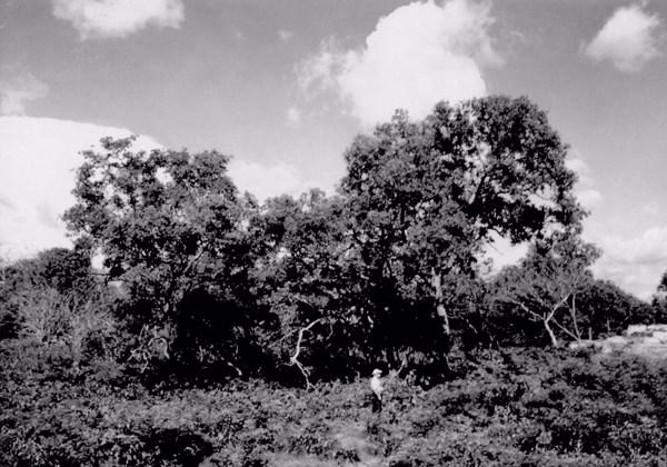 Alto da serra em Nazaré do Piauí (PI) - 1957