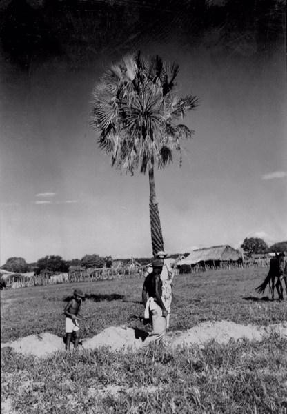 Carnaúba em Santa Cruz do Piauí (PI) - 1957