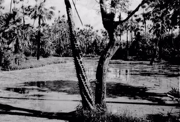 Carnaubais em Colônia do Piauí (PI) - 1957