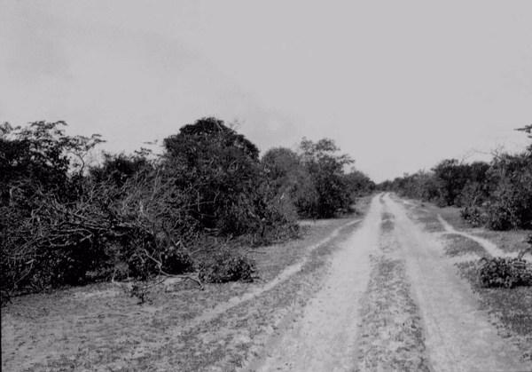 Estrada com caatinga em Jacobina do Piauí (PI) - 1957