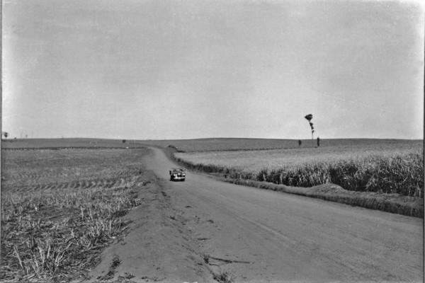 Plantação de cana perto de Bandeirantes (PR) - 1955