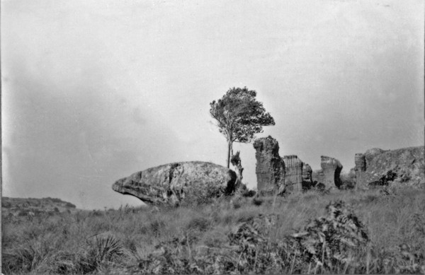 Urso : Vila Velha (PR) - 1955