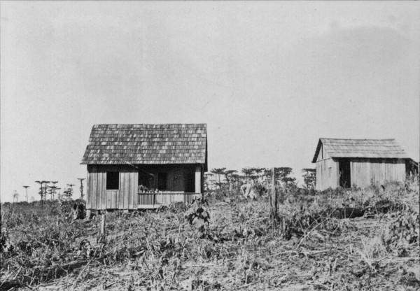 Casa de cabloco perto de Ortigueira (PR) - 1955