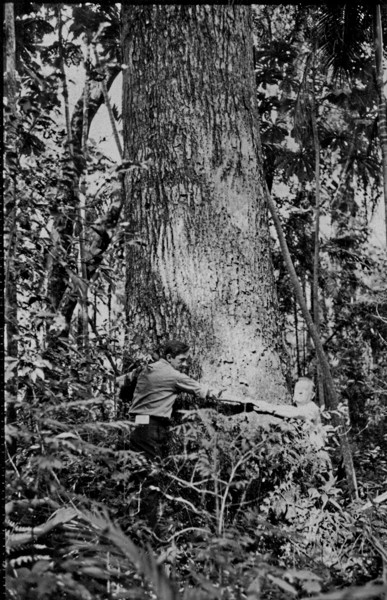 Tronco de cabreúva : Horto Florestal de Maringá (PR) - 1851