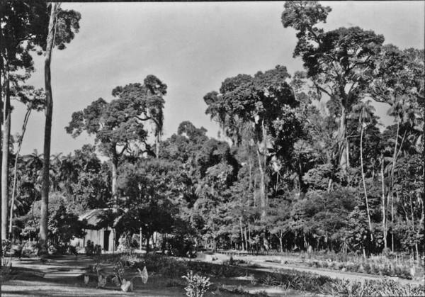 Aspecto do Horto Florestal de Maringá (PR) - 1955