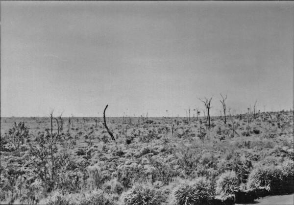 Samambaia de tapera, depois de Araruna (PR) - 1955