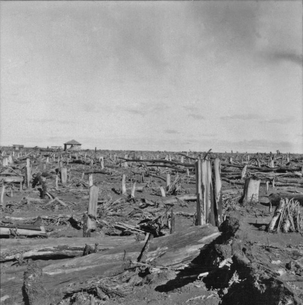 Derrubada no município de Peabiru (PR) - 1957