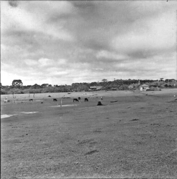 Criação de gado, perto do município de Paulo Frontin (PR) - 1957