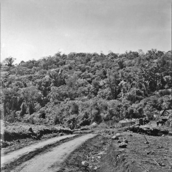 Mata pluvial do Rio Iguaçú : Município de Chopinzinho (PR) - 1957