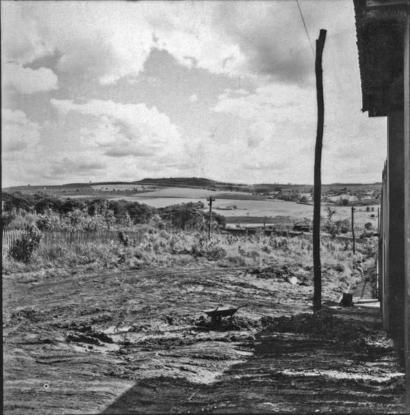 Plantação de alfafa e café no município de Bandeirantes (PR) - 1957