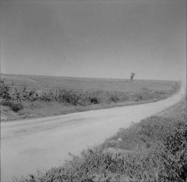Vista de canavial, no município de Cambará (PR) - 1960