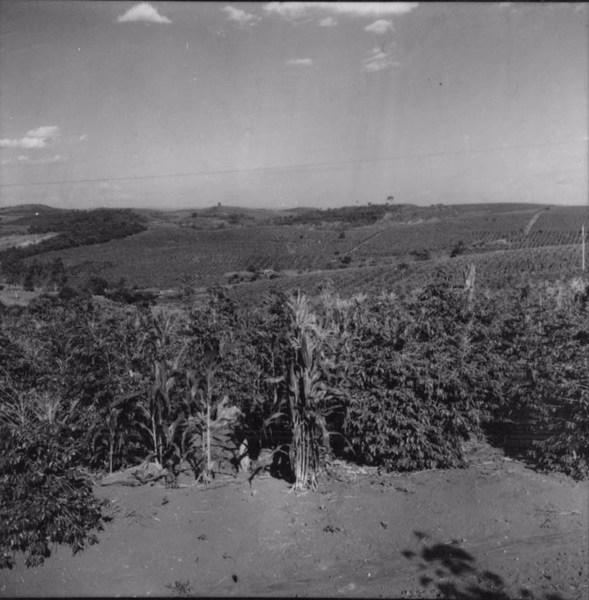 Aspecto do relevo no alto do planalto com culturas de café e milho, ao fundo, residências de colonos : Município de Abatiá (PR) - 1960