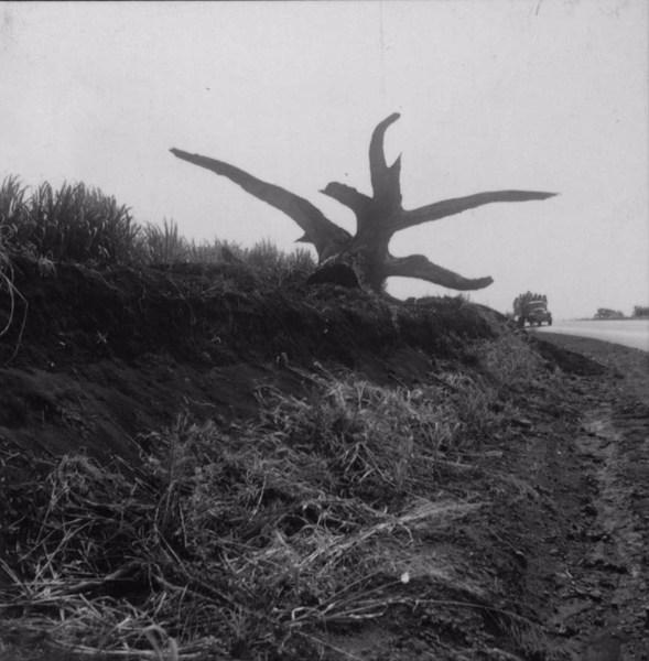 Estrada em direção à Andirá, vendo-se à esquerda um tronco : Município de Bandeirantes (PR) - 1960